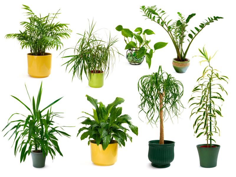 Frische Luft durch erfrischende Zimmerpflanzen
